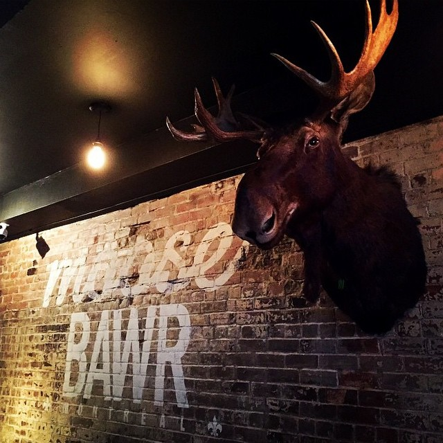 moose picture 11